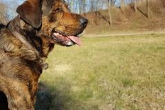 Tierarzt-Praxishund-Joe