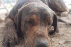 Tierarzt-Praxishund Joe schläft