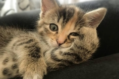 Junge-Katze-Tierarztpraxis-Andrea-Henke-Augsburg