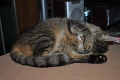 Tierarztpraxis-Katze
