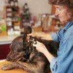 Tierarzt Augsburg Andrea Henke