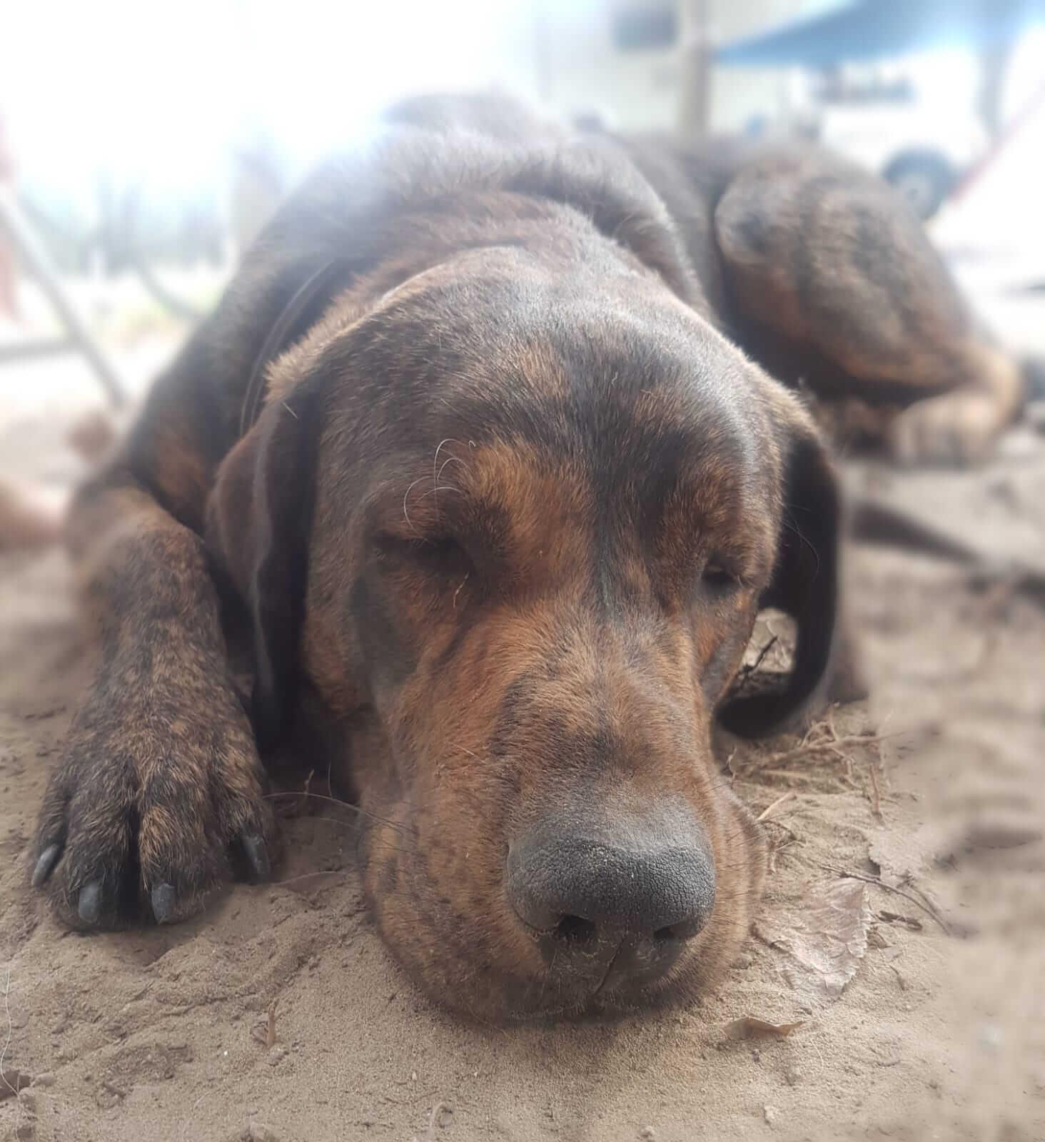 Hund Tierarztpraxis Andrea Henke